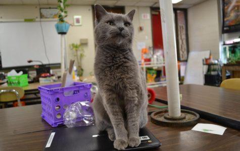 The Purr-fect Classroom Cat