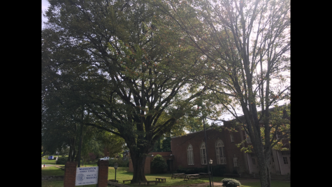 The tree in front of Warrenton Middle School at the beginning of fall.