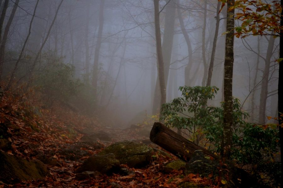 The fog was not shy on this hike and practically consumed the view ahead and behind me. However, it proved to be a spooky adventure as I moved through the fog, clueless to what lay around the next corner.