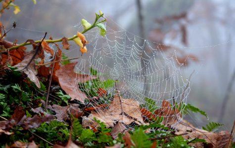 Intricate: Spider Webs