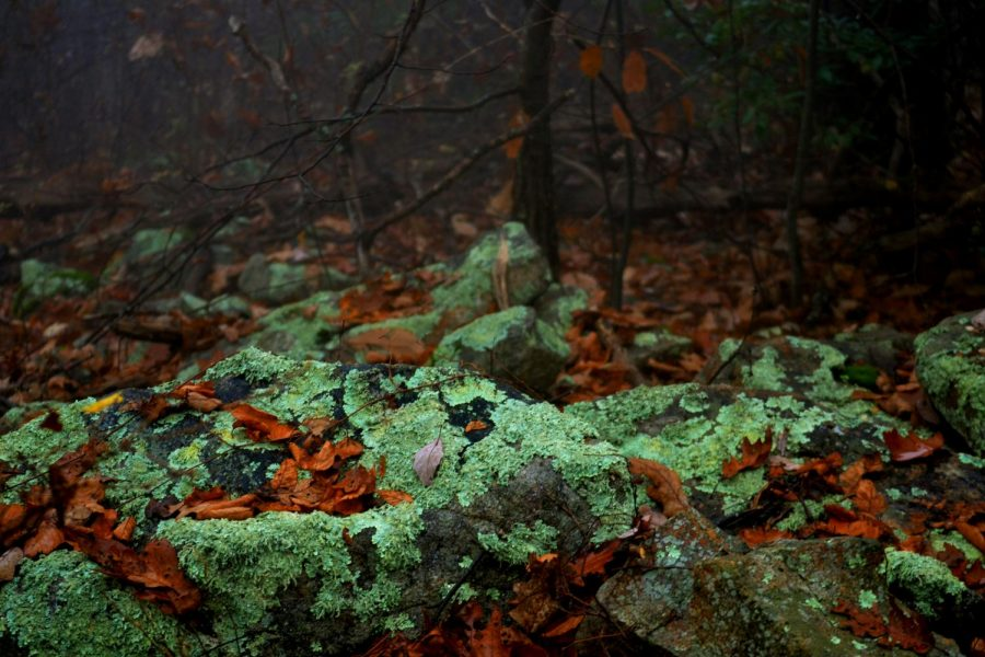 Fall+may+be+a+time+where+all+the+green+turns+brown+and+red%2C+but+pops+of+the+luscious+color+can+still+be+found+in+the+mossy+rocks+that+lie+on+the+forest+floor.