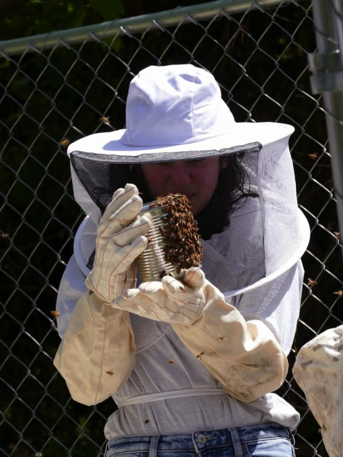 Examining the bees, ECO Club Vice President Cameron Morris prepares to place them in their new hives.