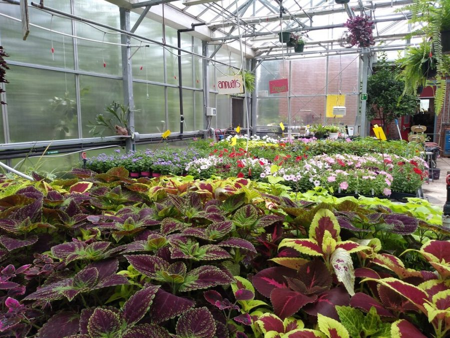 From hanging plants to colorful leaves and petals scattered across the greenhouse floor, the horticulture class has their hands full with plants to care for.