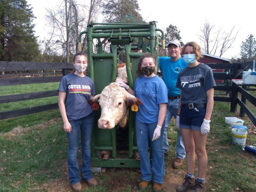 FFA (left to right) Lauren, Alana and Mckenzie practicing for their cattle working event before the competition. (Pictured: John Shiflett)